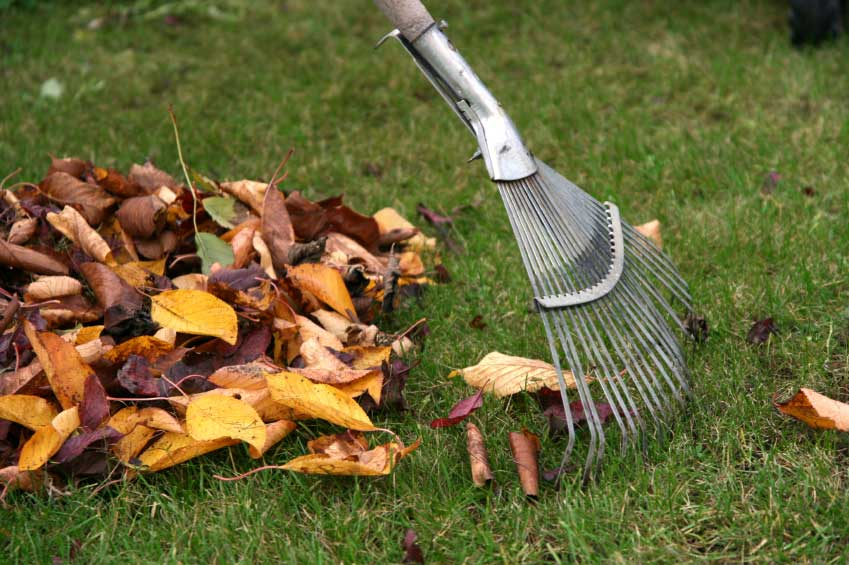 Fall Landscaping Tips executive landscaping - 15/16 - executive landscaping, inc.