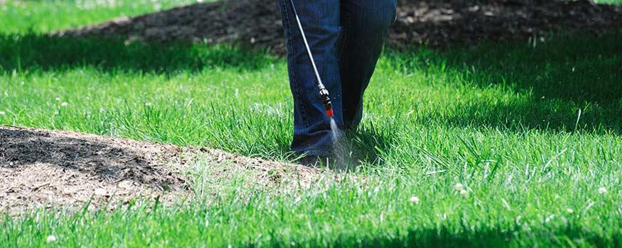 fall fertilizing