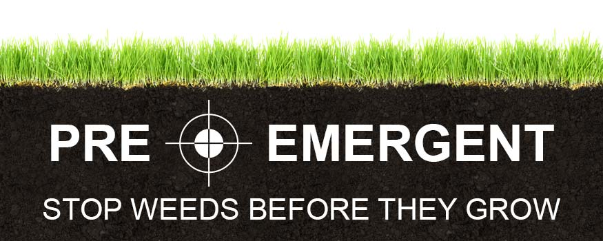 When To Apply Pre-Emergent