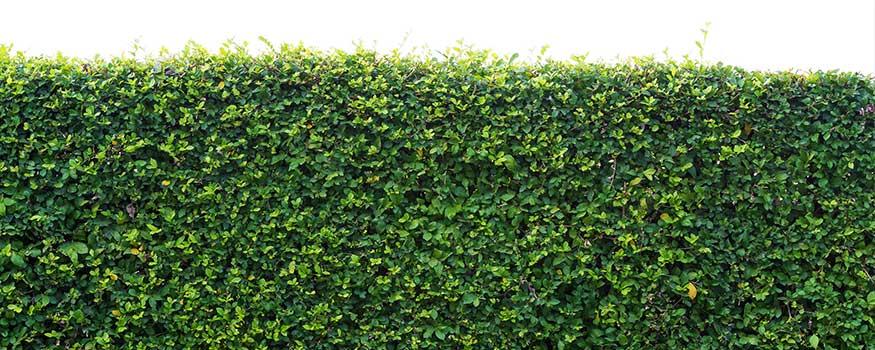 shrub fertilizer and horticultural oil