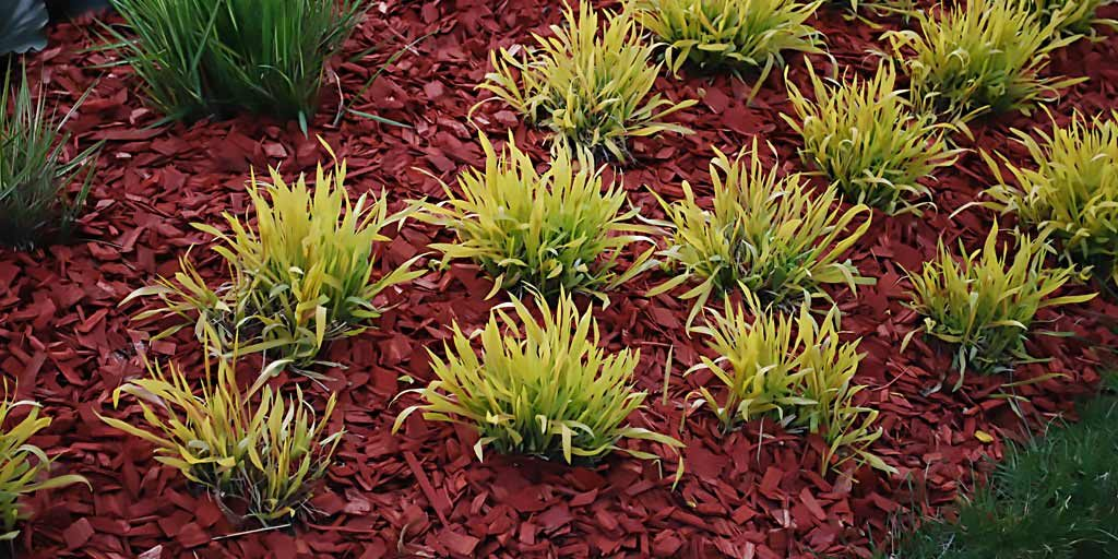 landscaping drainage