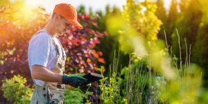 budgeting for landscaping